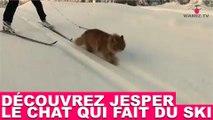 Découvrez Jesper, le chat qui fait du ski ! Tout de suite dans la minute chat #138