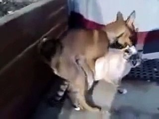Cat and dog mating.