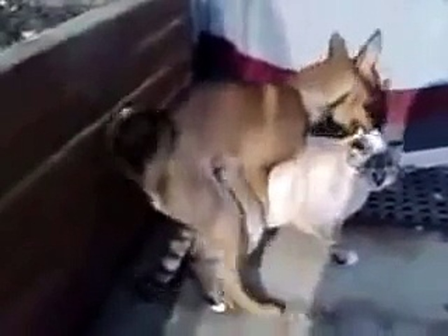 Animal Dex Video cat and dog mating. - video dailymotion
