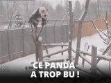 Da Mao le panda fait son numéro au zoo de Toronto
