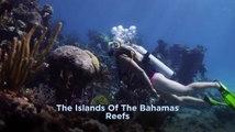 Bahamas - Reefs