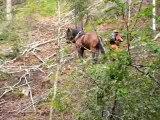 Chantier collectif de Débardage à cheval (Devoluy-mai-05-4