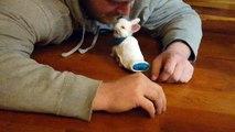 Buzz : Un lapin paralysé utilise une mini planche à roulettes pour se déplacer !