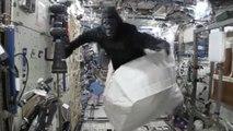 Pourquoi un astronaute a-t-il un costume de gorille à bord de la Station Spatiale Internationale ?