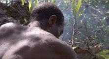 Il escalade un arbre de 40 mètres et risque sa vie pour offrir du miel à sa famille