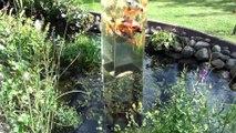 Il place un aquarium à l'envers dans un étang, la réaction des poissons est hallucinante!