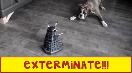 This Dog Doesn't Trust The Daleks
