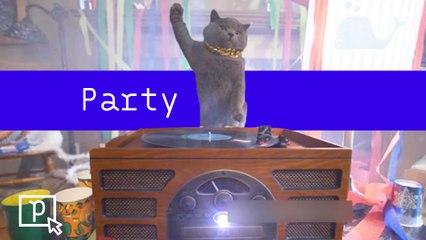 Party ! - Pépites du 25/02 - CANAL+