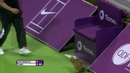 Un chat perturbe un match de tennis à l'Open du Qatar