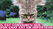 Il est convaincu que son chat est un imposteur ! Plus d'infos dans la minute chat #142
