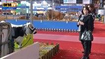 Salon de l'agriculture: les exposants attendent les politiques de pied ferme