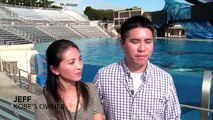 Kobe The Therapy Dog Meets Dolphins and Whales At SeaWorld San Diego - SeaWorld®