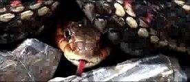 Booba - Comme les autres (video clip officiel)