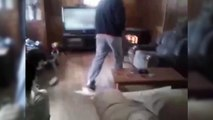 Dogs who never let you sitting - Funny dog vidoes