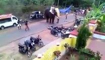 Fora de controle, elefante destrói veículos,  assusta e quase mata pessoas na  India