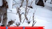 Skiing in Neelum Valley - Azad Kashmir Pakistan...