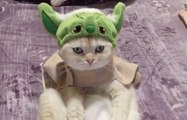 Un chat très fan de Star Wars et de maitre Yoda !