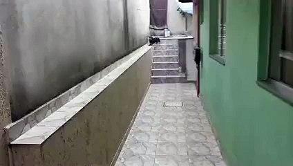 Bu Köpek Tam Bir Akıl Küpü..