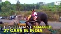 Elephant Damaged 27 Cars In India