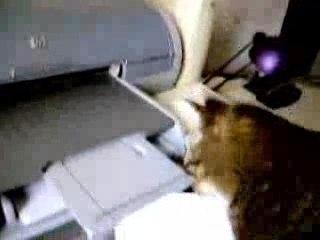 Le Chat et l'imprimante
