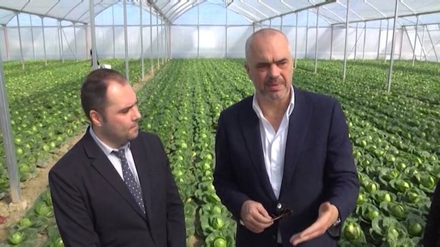 Projekti i Ramës për bujqësinë: Për 100 ha fermë, do të japim 1 mln $ në 5 vjet