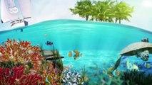 India's sea turtle village   Global 3000