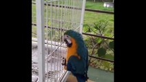 Gigi the Parrot Gets Blinged Out Beak with World's First Titanium Bird Prosthesis