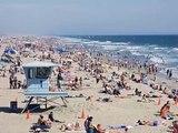 Rare Venomous Sea Snakes Keep Washing Up On California Beaches