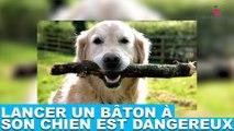 Lancer un bâton à son chien est dangereux ! Explications dans la minute chien #146