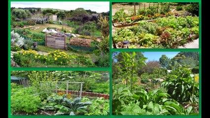 Le monde social et solidaire - EL4DEV - Le Papillon Source - Inner Africa - Permaculture en forêt pluviale