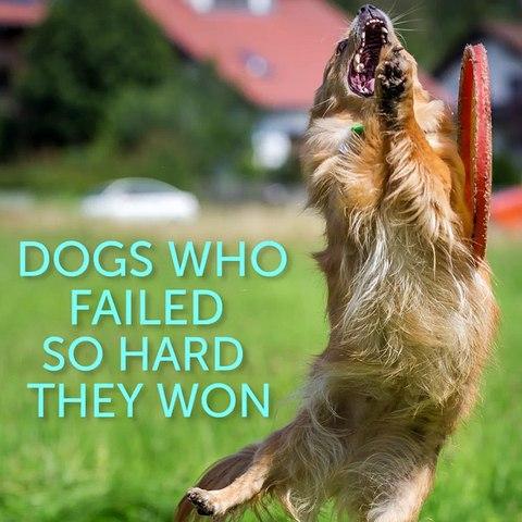 Dogs Who Failed So Hard They Won