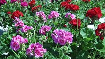 Les Floralies du Barcarès