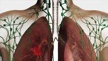 Au coeur des organes : L'immunité adaptative