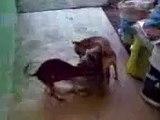 perros calientes de poza rica