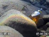ROV with Underwater Camera Finds Lost Beer- Underwater Robotic Camera