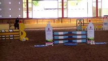 Crosstown Disco 5-year-old Crosstown Dancer mare