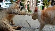【かわいい】猫ちゃん20連発 Part1   Cute Cats 20 Part1