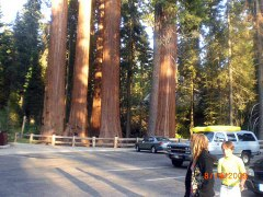 my trip to the Sequoias