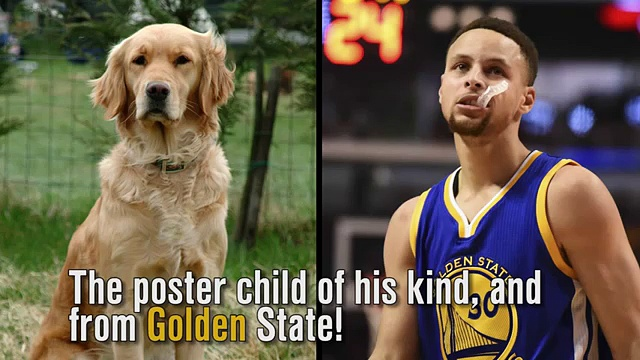 What if dogs were NBA All-Stars (News World)