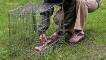 Le Chien: Enquête Sur Un Animal Familier