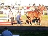 Horse pulling competition Pontiac Illinois 2007