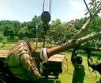 Loading Root Ball Mango Plant 2(sevana Plant Nursery Ampara)