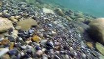 Buzz : Sous l'eau avec une GoPro !