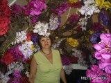 Выставка цветов Хайфа Израиль. Орхидеи