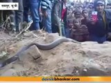 Snakes appear from grave