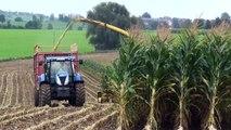 Mais hakselen 2013 : Firma Herens met New Holland T7070 en New Holland FR9060 nabij Mortie