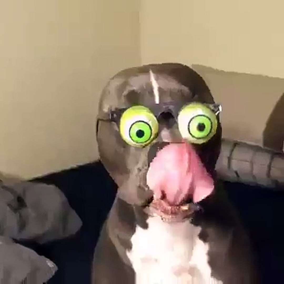 So Cute-Dog Funny Videos