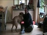 Tara onze hond en Roland lekker aan het spelen.