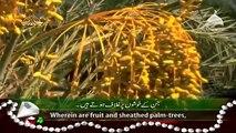 Surah Rahman - Qari Syed Sadaqat Ali