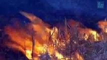 Des chevaux sauvages échappent à un incendie